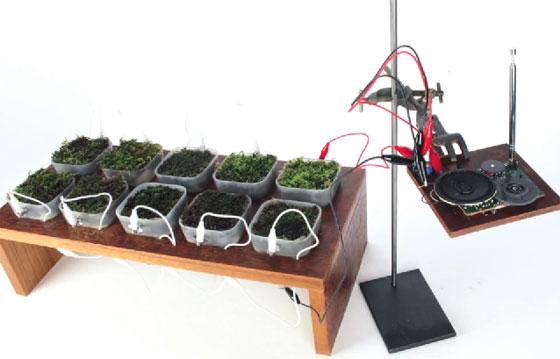 Radio FM alimentada con plantas