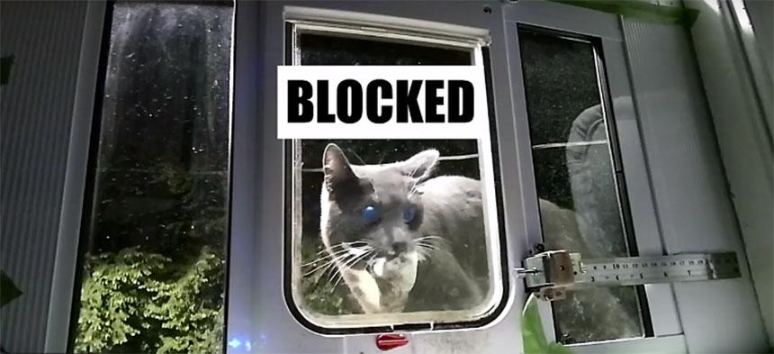 Cómo controlar lo que hace tu gato con Machine Learning
