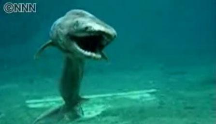 Tiburón primitivo filmado en aguas japonesas