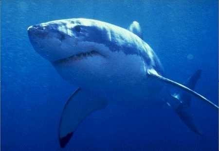 Un albañil borracho caza un tiburón de 1,3 metros